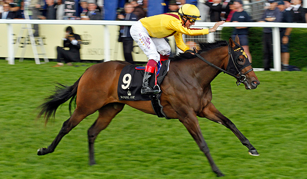 Lady Aurelia против Queen Kindly