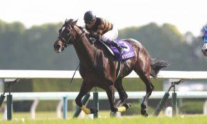 Kitasan Black ставит новый мировой рекорд
