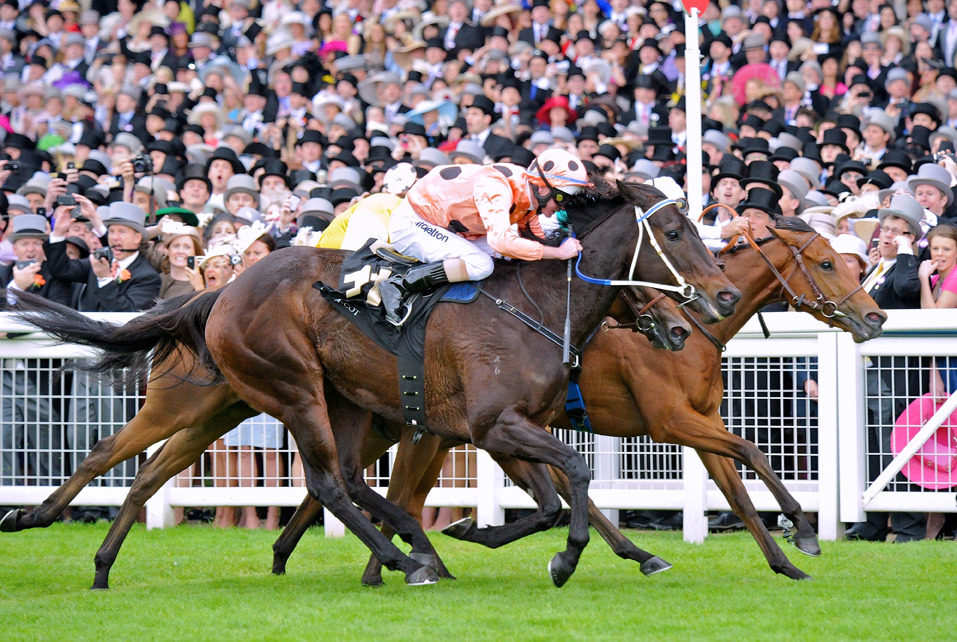 Black Caviar, Ascot, photo by horseracingpjs blogspot