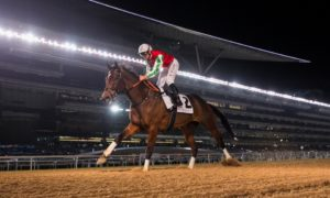 Фавориты Dubai World Cup 2019, Sheema Classic и Turf